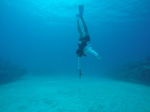 freediving lessons turks and caicos